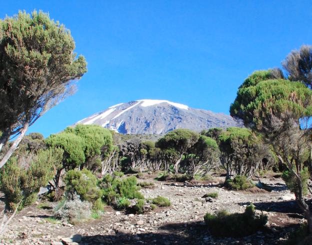 Kaffee in Tanzania – Ein Bericht vom Kilimanjaro
