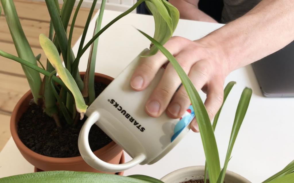 Kaffee und Pflanzen. Kann man Blumen mit kaltem Kaffee gießen?